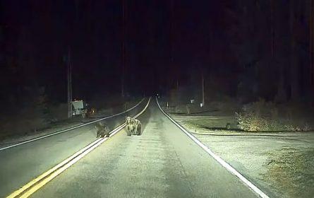 Teslin autopilot spasio vozača od medvjeda ili možda obrnuto, a to možete pogledati u Videu