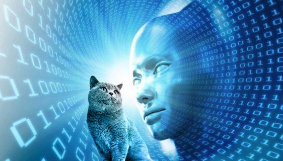 Vještačka inteligencija kaska za našim ljubimcima