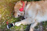 Muzička platforma Spotify odabrala omiljenu muziku za vašeg kućnog ljubimca