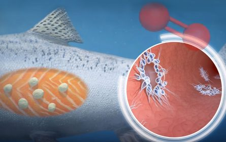 Naučnici otkrili organizam koji opstaje bez kiseonika