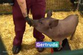 PETA poručila Masku da testira čip na svom mozgu