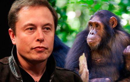 Neuralink sad ugradio čip u majmuna